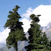 2012_023_nepal